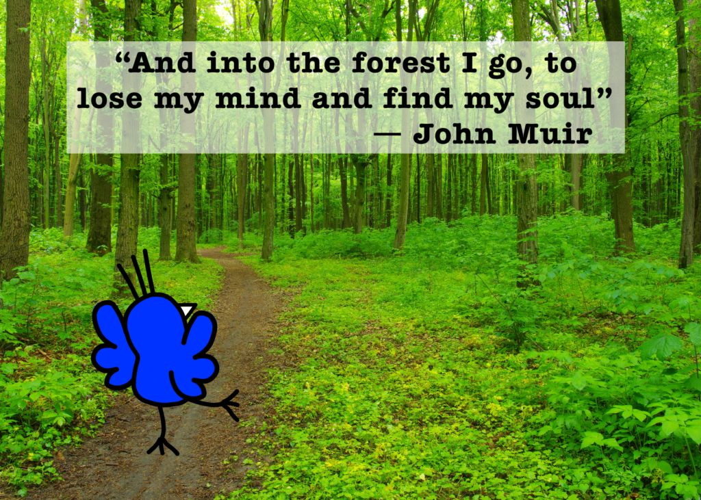 Save the forests quotes
